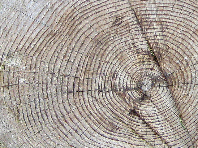 Tree rings - geograph.org.uk - 738518